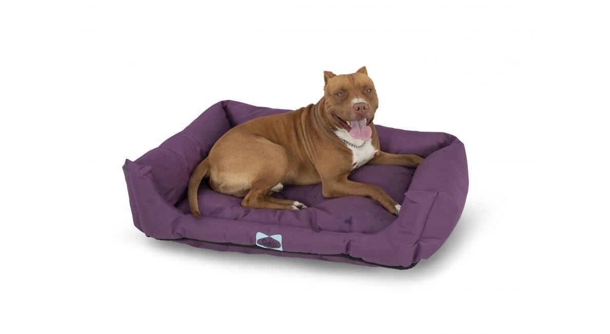 מזרן לכלב Sealy dog