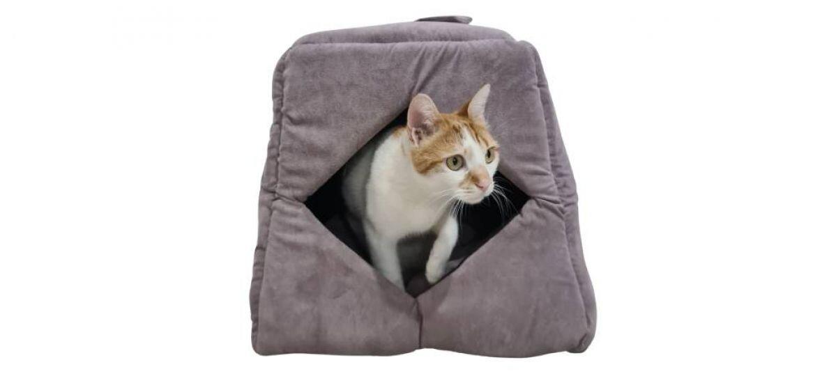 מיטת סילי לחתול