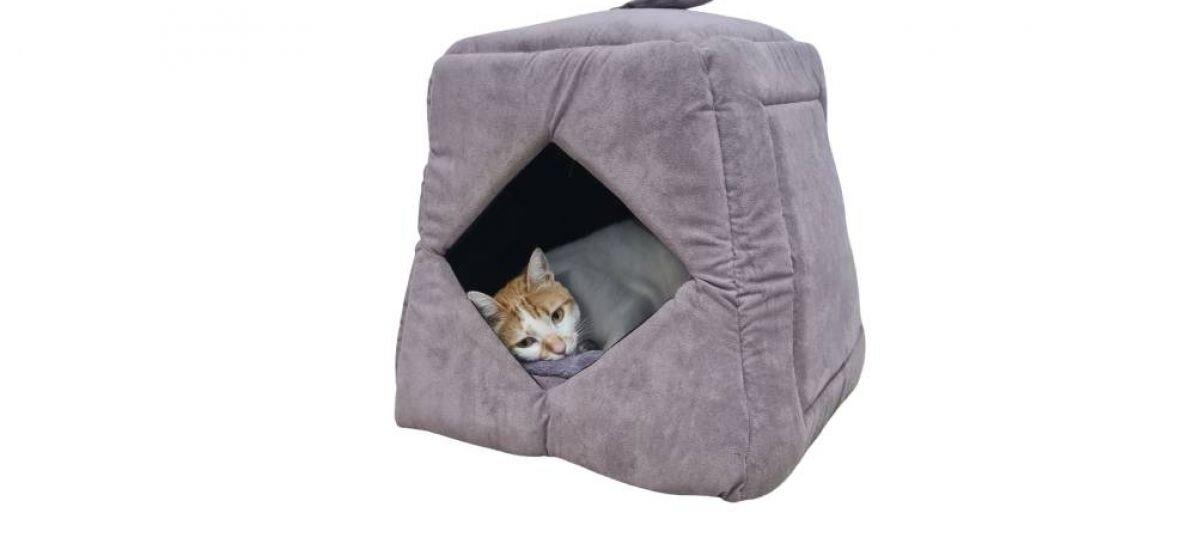 מיטת sealy לחתול